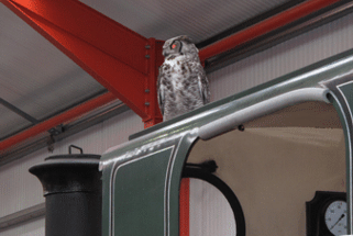 The owl on Mirvale's cab